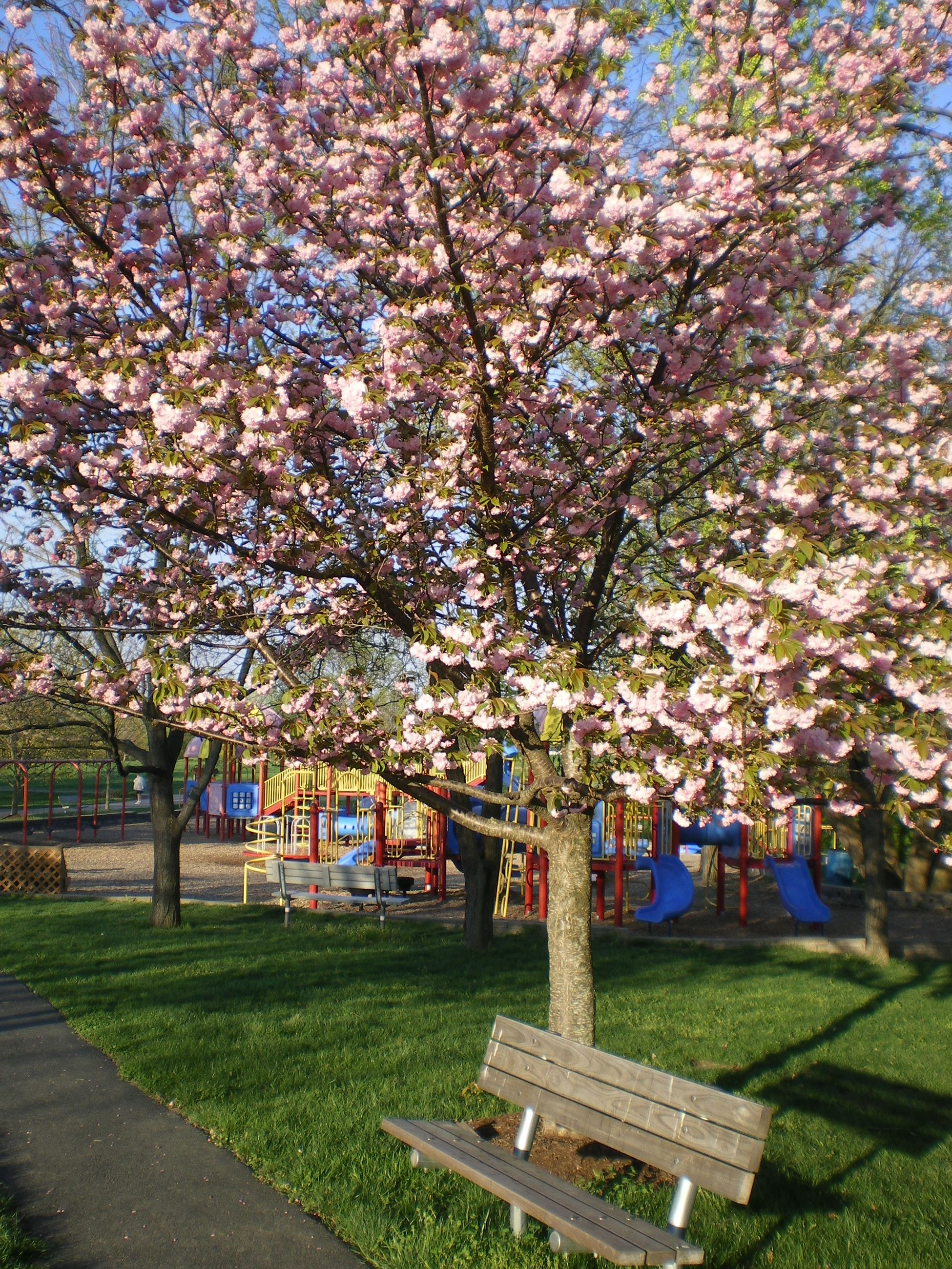 Tree and bench at playground